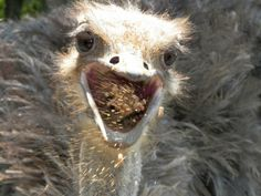 Best Ostrich picture ever!! Just saying!!