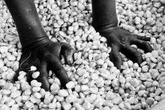 Da Pisa all'Etiopia: il progetto per proteggere i raccolti dai cambiamenti climatici
