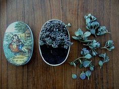 The most adorable, pocket-size, candy-tin succulent gardens.  You can even make them in an Altoids tin.