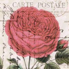 paula scaletta carte postale rose