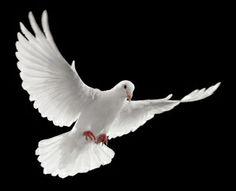 DOVE | The Holy Spirit