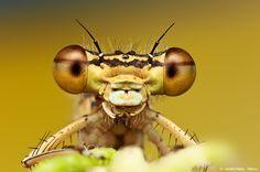 Dragonfly by Ondrej Pakan
