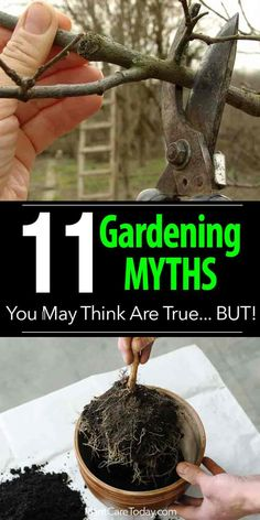11 Top Gardening Myths You May Think Are True. Gardening myths - we examine some common gardening myths and give you the information you need to sort truth from myth. Read on to [LEARN MORE]