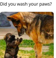The Funniest Quarantine Dog Memes - It's Rosy Funny Dog Memes, Funny Cats And Dogs, Funny Animal Memes, Funny Animal Pictures, Cat Memes, Dog Pictures, Cute Dogs, Funny Animals, Cute Animals