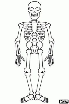 Human skeleton for Halloween celebration colouring page / Dekokin