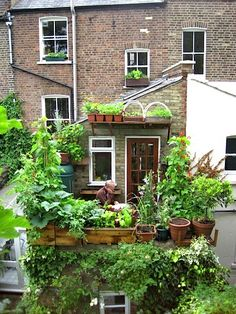 £669 ($1068 Canadian) worth of food grown on this patio, balcony and window sill, urban, roof top, square foot