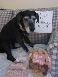 Our sweet Heidi celebrated her 17th birthday.  We love her so much!