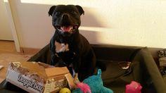 Zeke - DoggieBag.no #DoggieBag #Hund Pitbulls, Dogs, Animals, Pet Dogs, Animales, Animaux, Pitt Bulls, Pit Bulls, Doggies