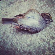 dead bird @ev_chapman- #webstagram