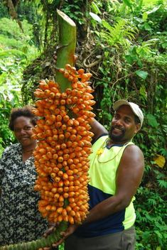 TROPICAL FRUIT TREES & OTHER FLORA & FAUNA! on Pinterest