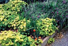 Grow Your Own Mosquito Repellent:  Lemon balm is a valuable ally against biting insects, and a gentle curative.