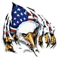 Things To Consider When You Go Camping American History, American Flag, Eagle Drawing, Crane, Patriotic Pictures, Patriotic Tattoos, 12 Tribes Of Israel, Eagle Art, Tatoo