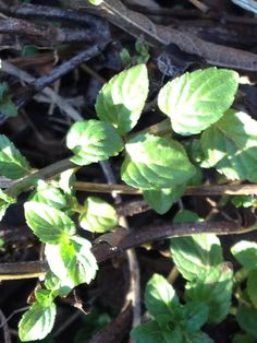 My Life's Journey — Your Daily Herb   Feeling the winter blues or even...