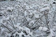 Witte tuin.