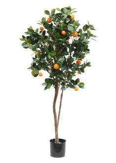 4) L'oranger, l'arbre qui fait parti du titre du livre, revient à plusieurs endroits dans l'histoire et joue un rôle clé dans l'intrigue de ce livre. Le parfum préféré de Marion est le fleur d'oranger.