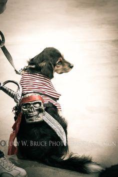 Dog of Caribbean