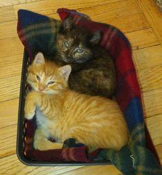 Comfort Kitties