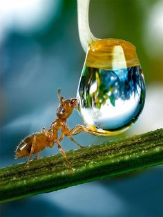 Ant drinks from a water droplet in a tiny world where the physics in daily life work differently. #bandentrend.nl