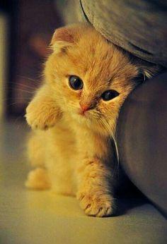 Cute kitten #cats