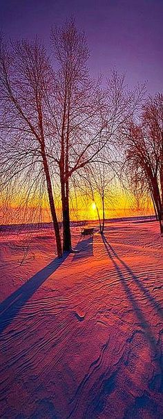 AMAZING .... winter snow sunset #tree #photo by Phil Koch on flickr