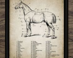 Vintage Pferdenanatomie drucken - Pferd Anatomie Illustration - Pferd Anatomie Wandkunst - druckbare Kunst - Single Print #680 - sofort-DOWNLOAD