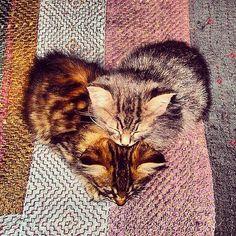 #Cats #Cat #Kittens #Kitten #Kitty #Pets #Pet #Meow #Moe #CuteCats #CuteCat #CuteKittens #CuteKitten #MeowMoe Love is real ... https://www.meowmoe.com/31212/