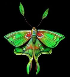 Luna moth oh my, the beauty doesn't look real -- looks like a painting