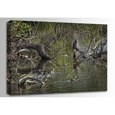 Great Horned Owl And Mallards 36x24 125-0110467  http://www.afwonline.com/ic280frm.asp?prodno=125-0110467