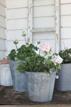 Easy To Grow Houseplants Clean the Air Flowering Houseplants Easy-Care Garden Plants Galvanized Planters, Garden Planters, Galvanized Steel, Container Plants, Container Gardening, Pink Geranium, Reuse Recycle, Ikebana, Dream Garden