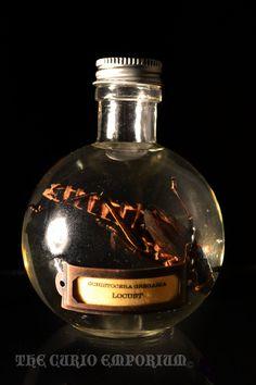 Schistocera Gregaria Locust Specimen Jar  SKU.ENSP02. $18.00, via Etsy.