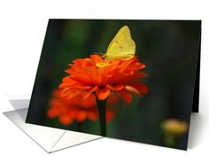 Yellow Butterfly (Clouded Sulfur) on Orange Zinnia -- Blank card http://www.greetingcarduniverse.com/collections/animals-pets/butterflies-caterpillars-moths/yellow-butterfly-clouded-sulfur-on-488916?gcu=42967840600