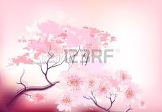 fleur de cerisier: Belle sacura printemps branche de cerisier en fleur avec gros plan ciel rose - croquis Illustration