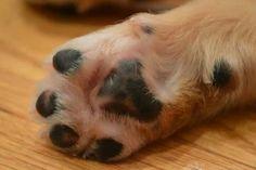 Hudson paw <3