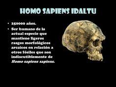 Elhombre de Herto(Homo sapiens idaltu) es unasubespeciedeHomo sapiensdescrita a partir de especímenesfósilesencontrados en las proximidades de la localidadetíopede Herto Bourien el año1997. Están capacitados para conocer y reflexionar respecto a lo que conoce.