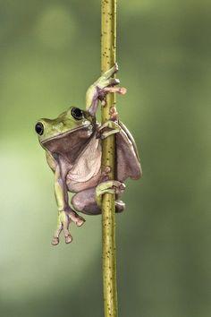 frog pole dance