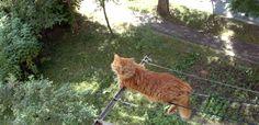 Балкон - друг котов. 2014.