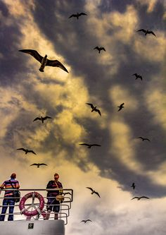 the gulls following the ferry for tourist food