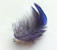 Blue Feather by cheb