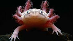 Dünyanın En İlginç 21 Hayvanı [World's Most Interesting 21 Animals]
