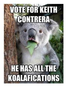 Funny koala is surprised: What do you mean Im not a bear? I have all the ko - Koala Funny - Funny Koala meme - - Funny koala is surprised: What do you mean Im not a bear? I have all the ko Koala Funny School Campaign Posters, Student Council Campaign, Student Council Posters, Campaign Slogans, Student Gov, Student Leadership, Koala Meme, Funny Koala, Bear Puns