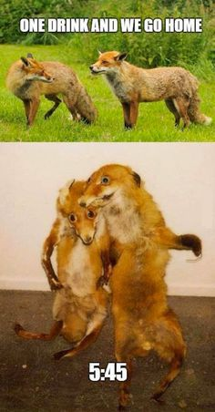 Check out these bad taxidermy examples. Taxidermy is one of those strange professions, you have to be that certain type of person that really enjoys what they do. Live Animals, Funny Animals, Funny Taxidermy, Fox Memes, Creepy, Scary, Funny Animal Pictures, Hilarious, Funny Animal Humor