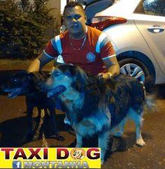 TAXI DOG MONTANHA TRANSPORTE DE ANIMAIS NO RIO DE JANEIRO: Grazi & Lulu (Rio pra Mirangaba/BA)16 a 19/01/2016...