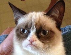 Un chat star du web qui a fait la richesse de son propriétaire. Grumpy Cat tire la gueule. Mais pourquoi ? Cette chatte souffre de nanisme félin mais aussi d'une poussée anormale des dents.