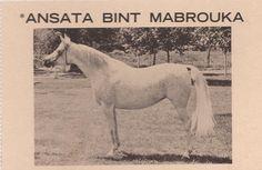 *Ansata Bint Mabrouka