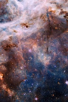˚The Tarantula Nebula