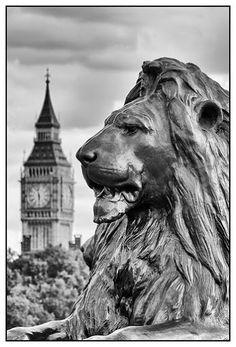 Trafalgar Square lion with Big Ben in background