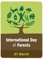 Today is International Day of Forests! Around 1.6 BILLION people (including 2,000+ indigenous cultures) depend on #forests for their livelihoods. They are home to more than 80% of all terrestrial species of animals, plants and insects. They mitigate climate change and protect the watersheds that supply 75% of freshwater worldwide. We love our forests! #IntForestDay