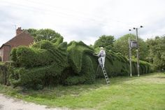 Massive Dragon Hedge Topiary John Brooker, a 75-year-old retiree in Norfolk, England, has spent the past 10 years patiently sculpting a hedge into a fantastic 100-foot-long dragon.