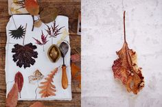 D I E T L I N D W O L F: leaves