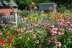 Full Sun Garden Perennial Flower Bed *** You can find more details by visiting the image link.